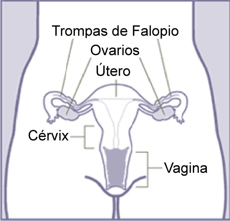 óvulos para candidiasis aparato genital femenino