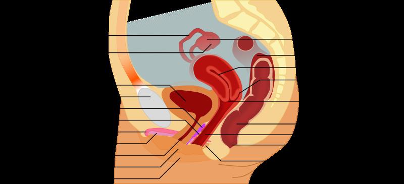 candidiasis genital vagina