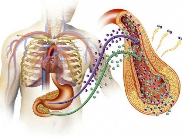 bacterias hongo candidiasis intestinal