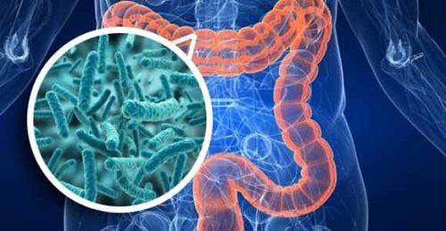 ilustración candidiasis intestinal