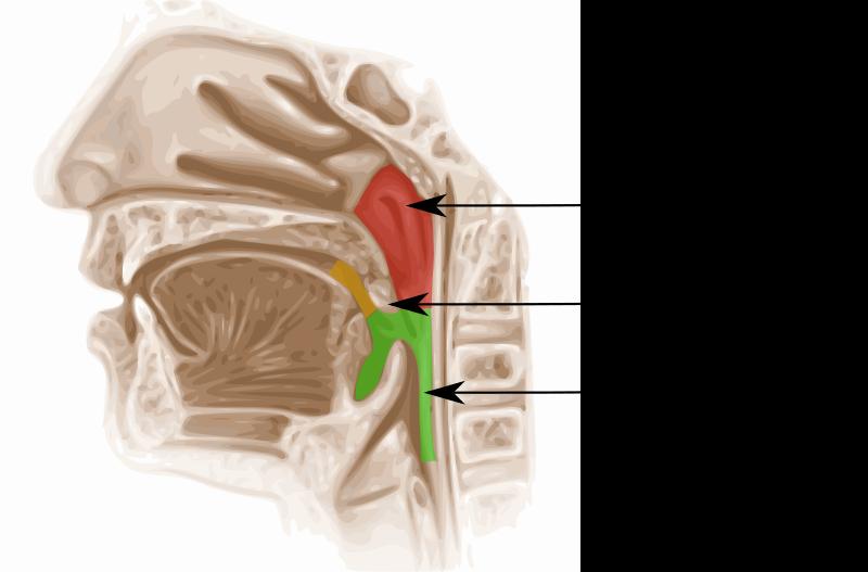 zonas del cuerpo que afecta la candidiasis oral