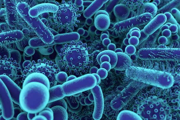 probióticos candidiasis microorganismos vivos